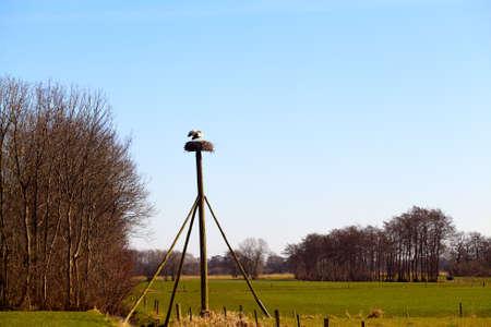 couple of storks on nest on the pole i photo