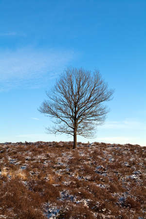lonelyness: one lonely tree over clear blue sky