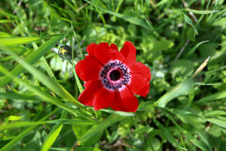 red tulip among green grass from the top Stock Photo - 13362994