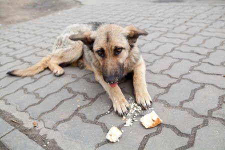 oude dakloze hond liggen op straat