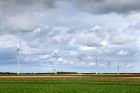 tulip fields and windmills over sky in Netherlands Stock Photo - 14171453