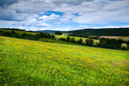 meadows with yellow flowers in alpine meadows in Burgsinn, Bavaria