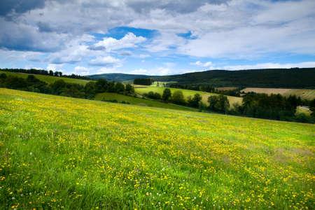 Wiesen mit gelben Blumen im alpinen Wiesen in Burgsinn, Bayern Lizenzfreie Bilder