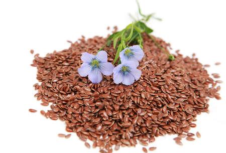 usitatissimum:  Linum usitatissimum - common flax seeds and flowers
