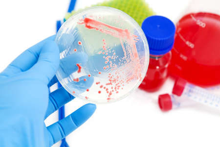 Mikroorganismen Mutanten auf Agarplatte im Labor Lizenzfreie Bilder