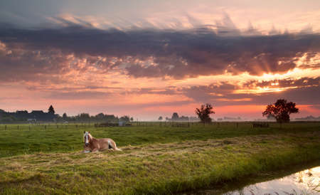 horse relaxed on pasture close to  river at sunrise