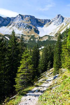 zonnige dag in alpiene bos, Beierse Alpen Stockfoto