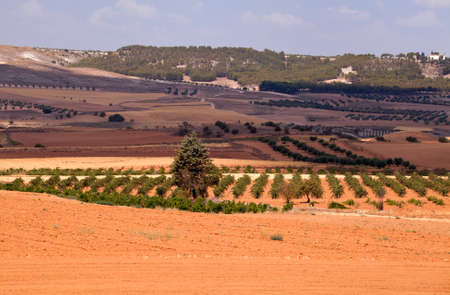 typical Spanish rural landscape with cultivated fields and vineyards photo