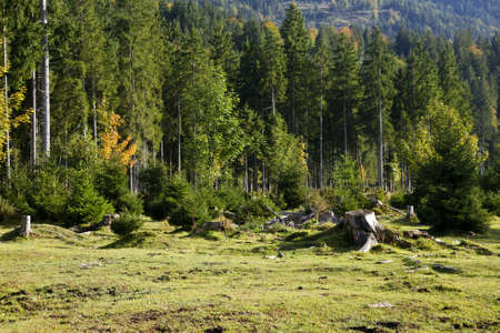 deforestation of coniferous forest in Bavarian Alps photo