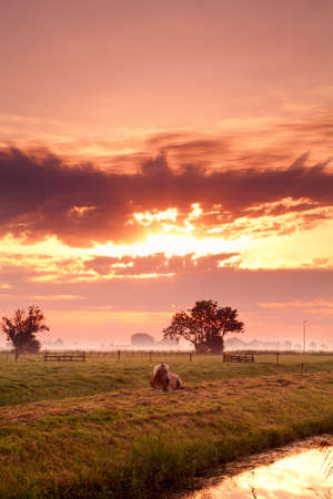 relaxing horse on Dutch pasture at colorful sunrise photo