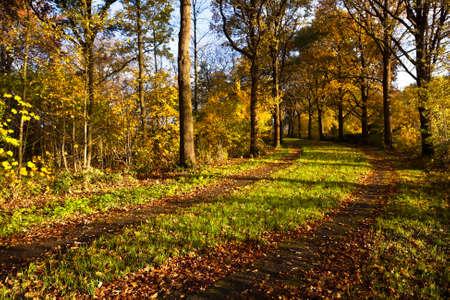 groningen: ground road in yellow autumn forest in Stadspark, Groningen