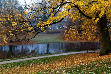colorful golden autumnin the park