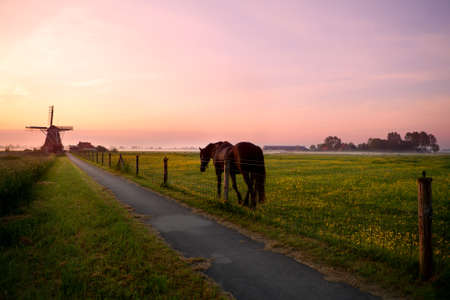 horse on pasture and Dutch windmill at summer sunrise photo