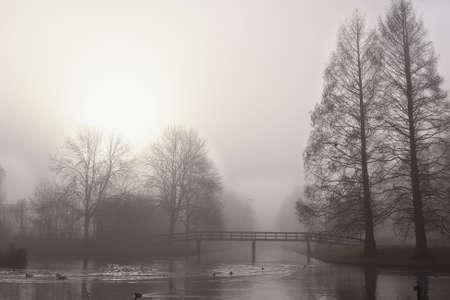 trees and wooden bridge over canal in dense morning fog photo