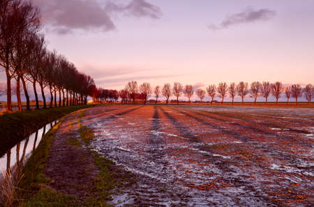 long tree shadows on plowed field during sunrise photo