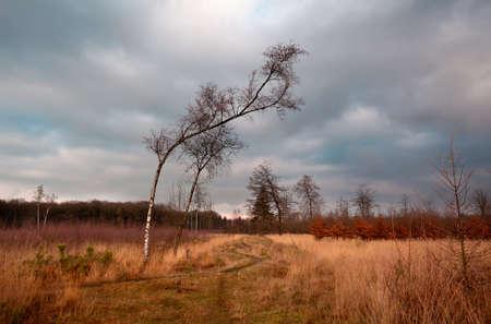 birch on wild savanna at clouded weather, Dwingelderveld Stock Photo - 16923531