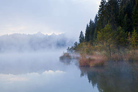 alpine forest by lake in dense morning fog photo