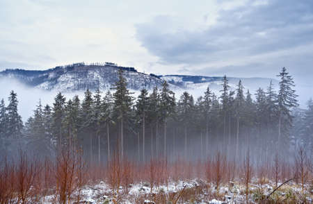 misty day in Harz mountains during winter photo