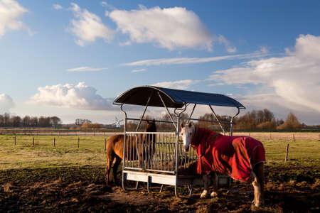 horses in blanket feeding on pasture outdoors Stock Photo - 17065844