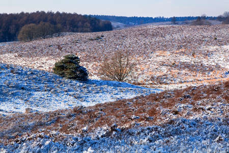 hills in Gelderland covered with snow photo