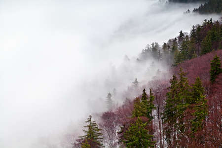 forest on Harz mountains in fog Banco de Imagens