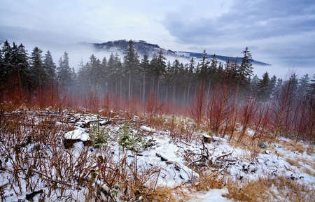 Harz mountains covered with snow in winter Stock Photo - 17229954