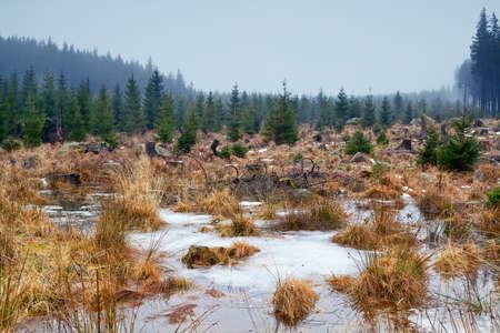 frozen winter swamp in Harz mountains Stock Photo - 17308835