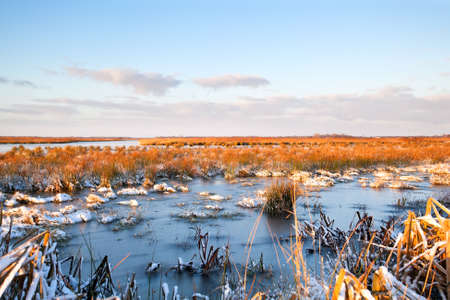 frozen swamp during winter in Drenthe photo