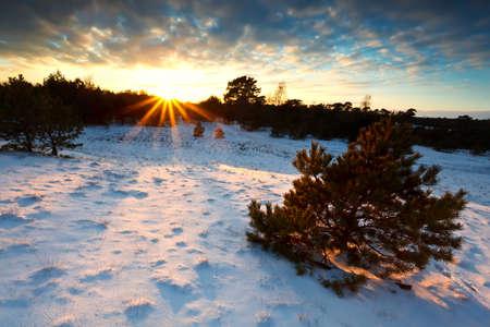 sunbeams at sunset over snowy hills, Veluwe, Netherlands Stock Photo - 17621227