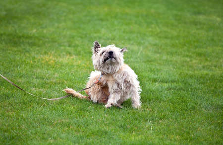 funny scratching dog with fleas on grass Stockfoto
