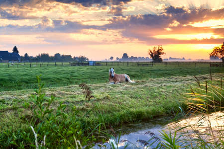 horse relaxed on pasture by canal at sunrise, Groningen