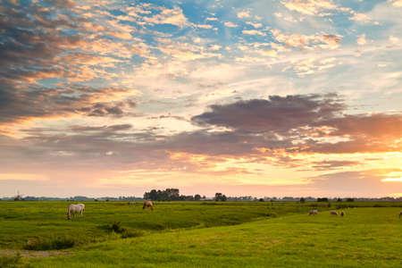 pastoral: dramatic sunrise over dutch pastoral, Groningen Stock Photo