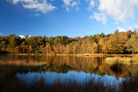 autumn forest by wild lake and beautiful sky Stock Photo - 18980268