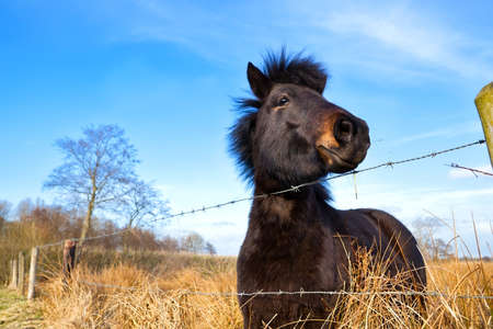cute brown pony outdoor on pasture Stock Photo - 19096350