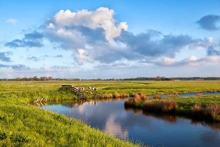 groningen: mooie lucht boven pastoraal met schapen, Groningen Stockfoto