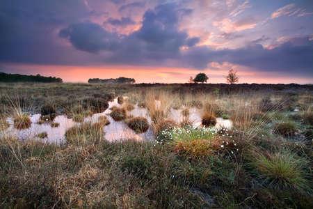 warm silent sunset over swamps in Fochteloerveen, Drenthe