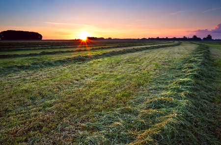 haymaking: sun star at sunrise over green haymaking with mown hay