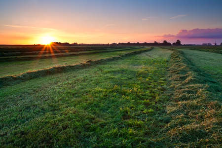 fresh green clipped hay on grassland at sunrise photo