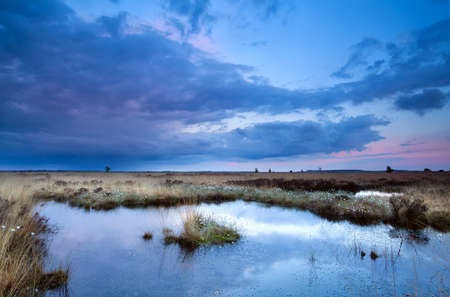 soft delicate pink and blue sunset over swamps Banco de Imagens