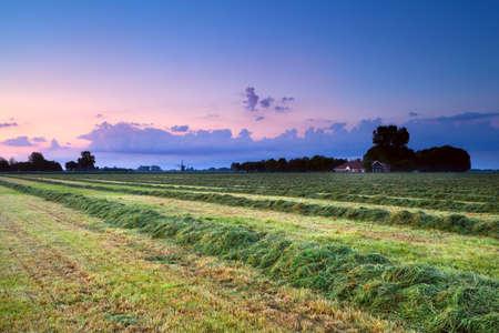 Heu auf Feld am Sommer rosa Sonnenaufgang, Groningen, Niederlande Lizenzfreie Bilder