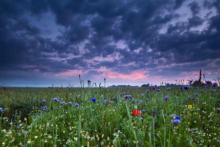 groningen: zomerzonsopgang over veld met wilde bloemen, Groningen, Nederland