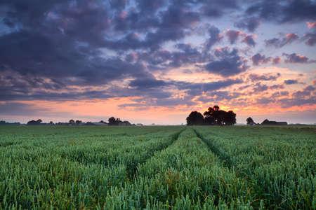 groningen: warme zonsopgang over tarweveld, Groningen, Nederland
