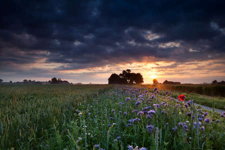 warm summer sunrise over flowering meadow and wheat field photo