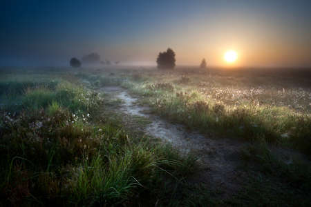 early summer: misty sunrise over countryside path through swamps, Fochteloerveen, Drenthe, Netherlands
