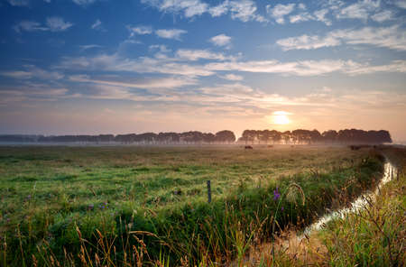 pastoral: summer sunrise over Dutch pastoral with canal