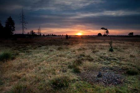 summer sunrise over wild meadows, Friesland, Netherlands photo