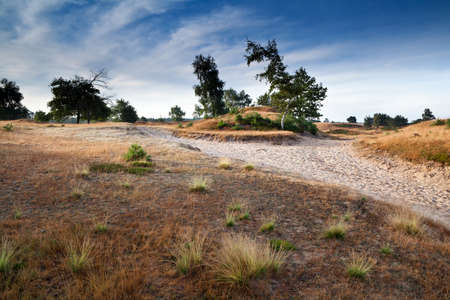 countryside path among sand dunes, Friesland, Netherlands