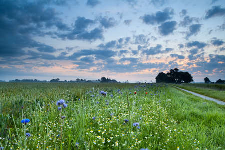 sunrise over field with many colorful wildflowers in summer photo