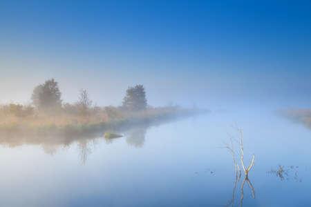 trees on lake in morning dense fog