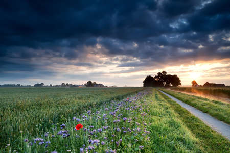 summer sunrise over Dutch farmland with wheat field and flowers photo